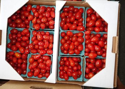 Leola Produce Auction - Cherry Tomatoes