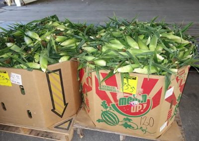 Leola Produce Auction - Corn