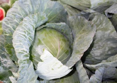 Leola Produce Auction - Lettuce