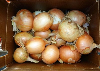 Leola Produce Auction - Onions