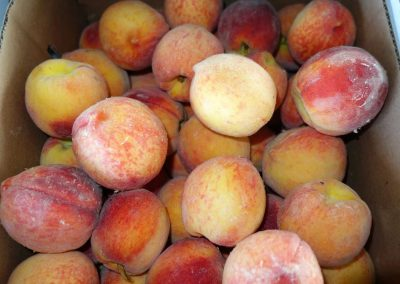 Leola Produce Auction - Peaches