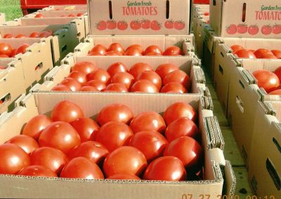 Leola Produce Auction - Tomatoes