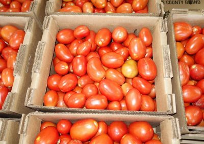 Image of Tomatoes