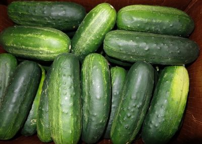 Leola Produce Auction - Zucchini