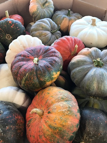Leola Produce Auction - Fall 2019
